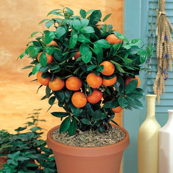 Junio 2002 - Cultivar árboles frutales en pequeños espacios