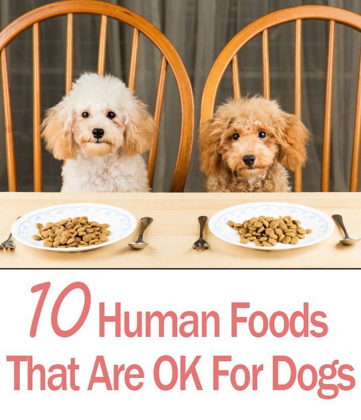 10-human-foods-ok-for-dogs