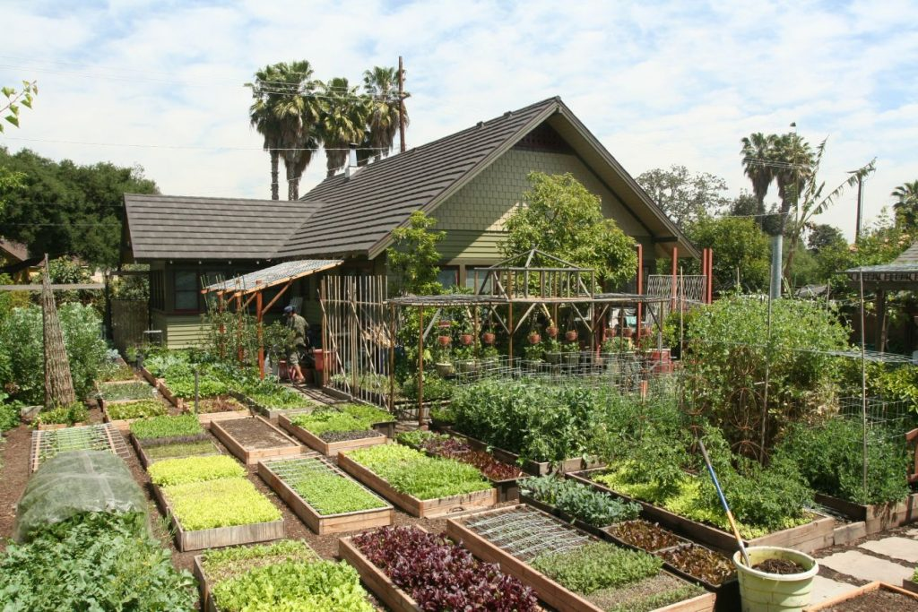 This family produces 6,000 pounds of food per year, right in their backyard!